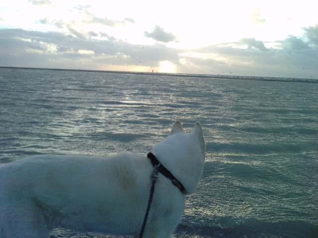 Neige : c'est beau la Baie de somme