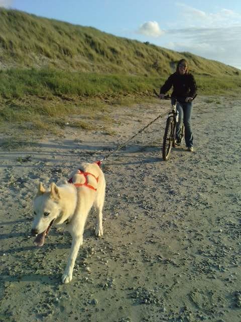 Twister le meilleur chien de traîneau venant de la SPA