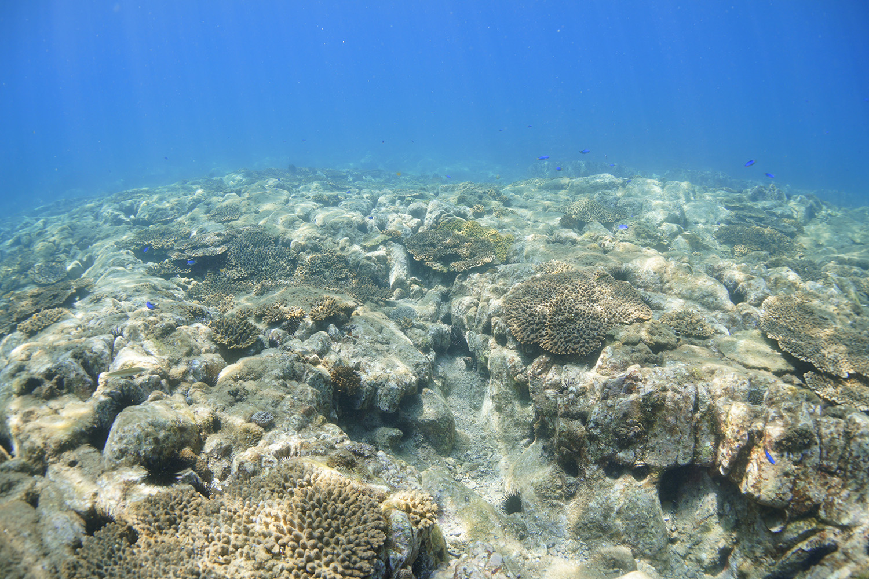 サンゴも見られる鬼海ヶ浦のきれいな海