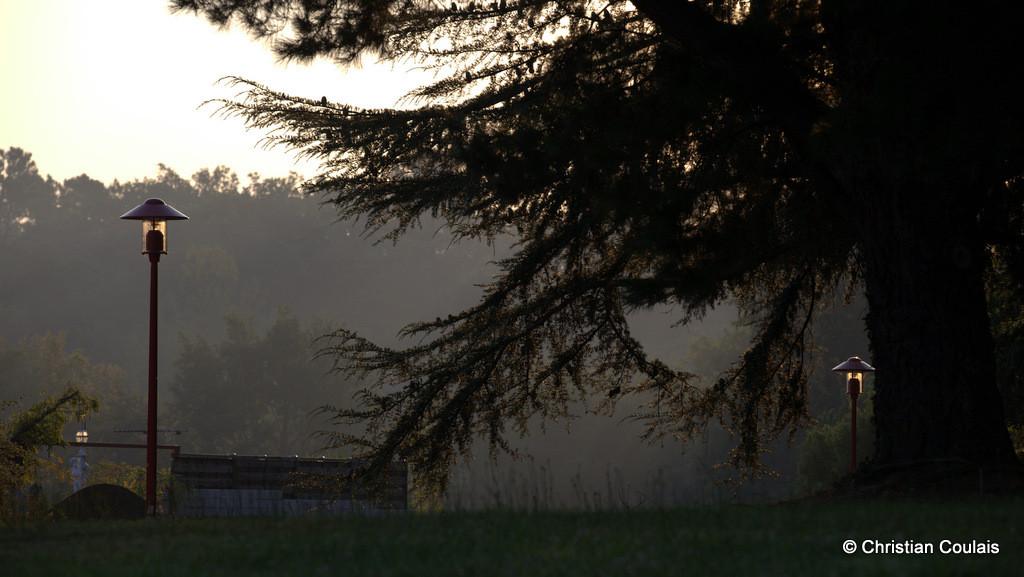 Cèdre au lever du jour, proche du vieux cimetière et du Musée de la Poterie de Sadirac. Gironde
