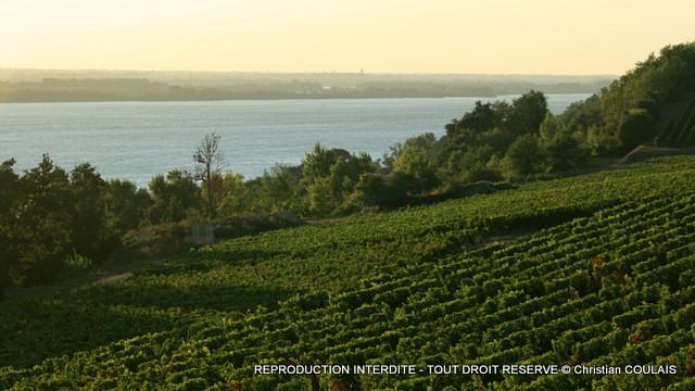 Vignoble des Côtes de Bourg, le long de l'estuaire de la Gironde