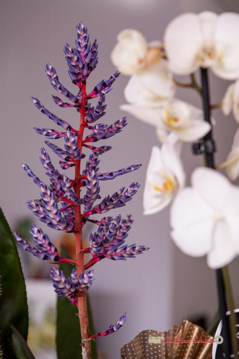 10 Fleurs et Passion, Véronique CONSTANT, Avenue de la Confluence, 47160 DAMAZAN Reproduction interdite - Tous droits réservés © Christian Coulais