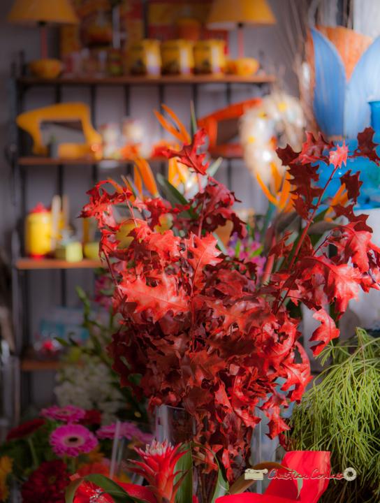 29 Fleurs et Passion, Véronique CONSTANT, Avenue de la Confluence, 47160 DAMAZAN Reproduction interdite - Tous droits réservés © Christian Coulais
