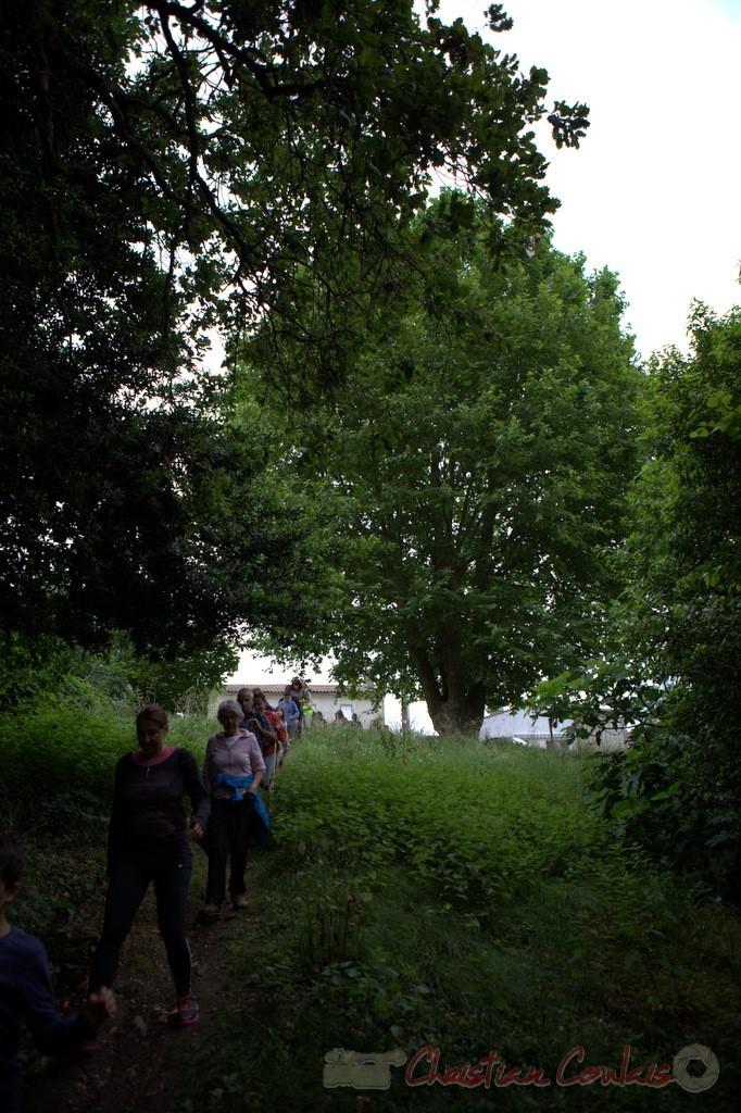 Festival JAZZ360 2015, randonnée pédrestre, chemin communal, Camblanes-et-Meynac. 14/06/2015