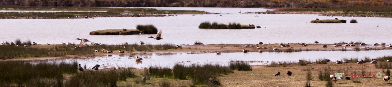 """""""Vol libre"""" Réserve ornithologique du Teich. Samedi 16 mars 2019. Photographie © Christian Coulais"""