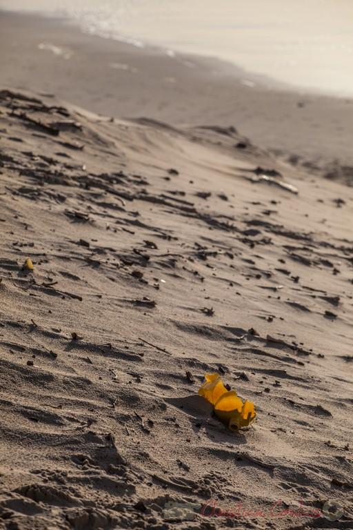 """""""Des tritus"""". Biscarrosse océan, plage du Vivier, Landes. 21 février 2016"""