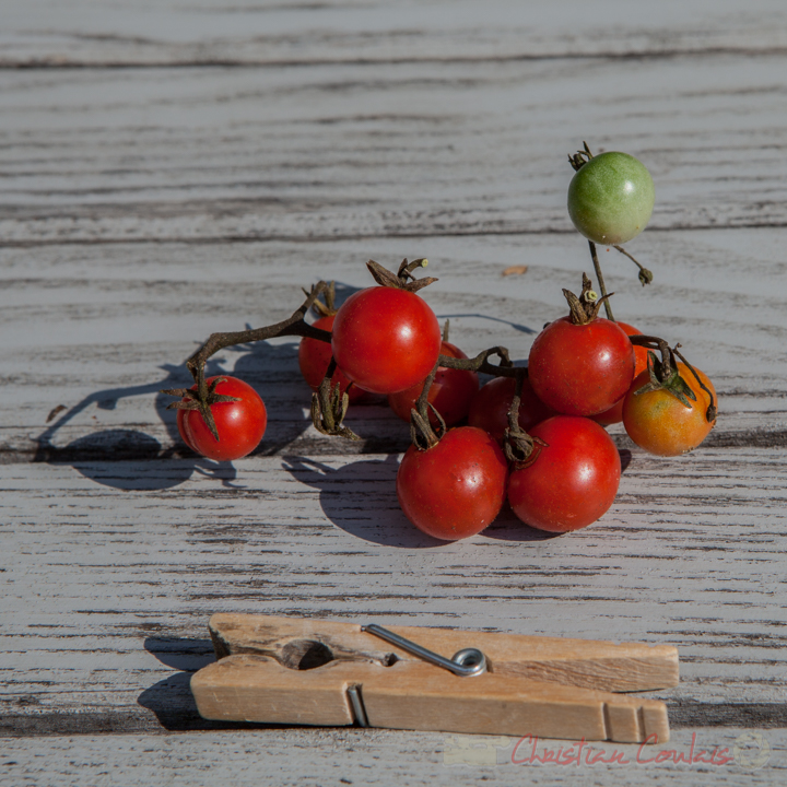 Collection de tomates, Cerise Rouge