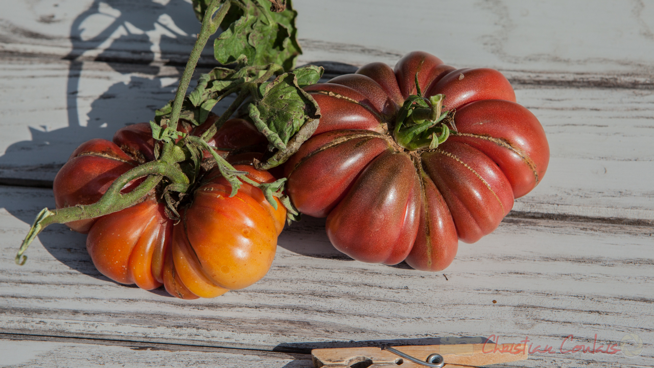 Collection de tomates, Zapotec Pink Plated