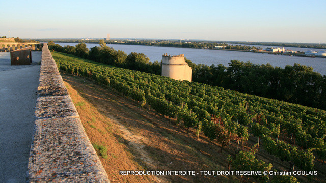 Vignoble des Côtes de Bourg, Route départementale 669E1, le long de la Dordogne, face au Bec d'Ambès
