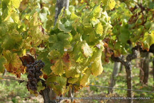 Vignoble de SAUTERNES