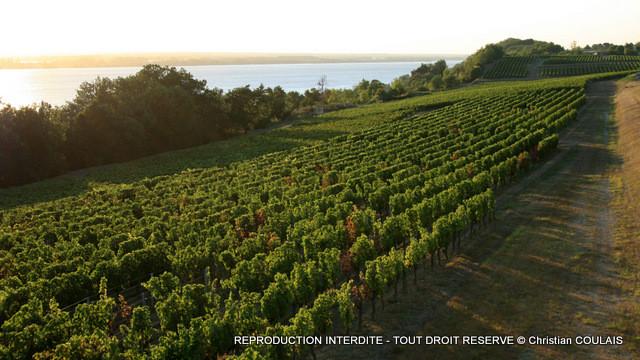 Vignoble des Côtes de Bourg, le long de l'estuaire de la Gironde, depuis le Château Eyquem