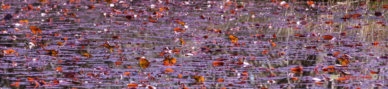 Water art I. Réserve ornithologique du Teich. Samedi 16 mars 2019. Photographie © Christian Coulais