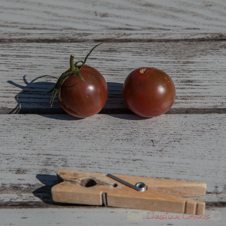 Collection de tomates, Cerise noire