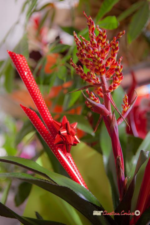17 Fleurs et Passion, Véronique CONSTANT, Avenue de la Confluence, 47160 DAMAZAN