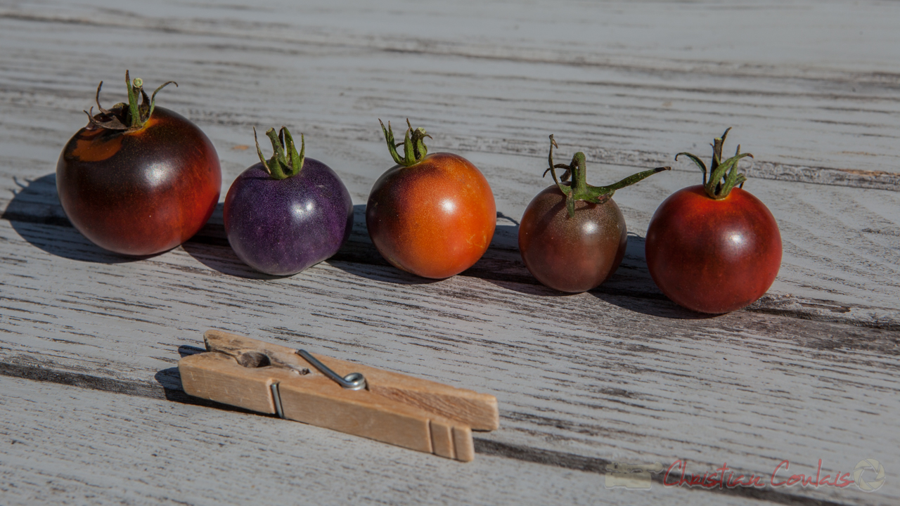 Collection de tomates, a
