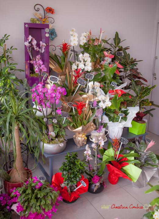 28 Fleurs et Passion, Véronique CONSTANT, Avenue de la Confluence, 47160 DAMAZAN Reproduction interdite - Tous droits réservés © Christian Coulais
