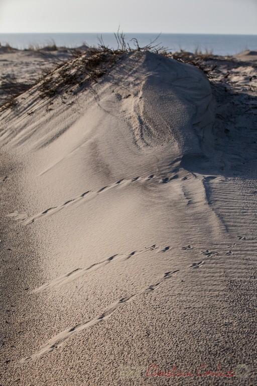 """""""Suivez le chemin"""". Biscarrosse océan, plage du Vivier, Landes. 21 février 2016"""