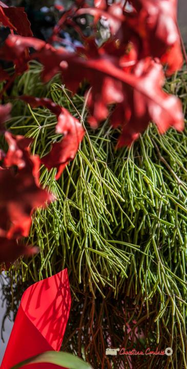 21 Fleurs et Passion, Véronique CONSTANT, Avenue de la Confluence, 47160 DAMAZAN Reproduction interdite - Tous droits réservés © Christian Coulais