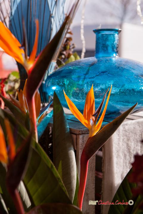 8 Fleurs et Passion, Véronique CONSTANT, Avenue de la Confluence, 47160 DAMAZAN Reproduction interdite - Tous droits réservés © Christian Coulais