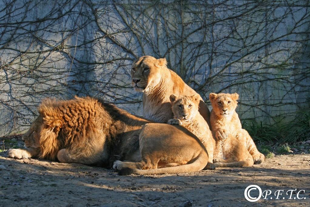Kankaï et Shirwane avec Sita leur mère et Jetpur leur père