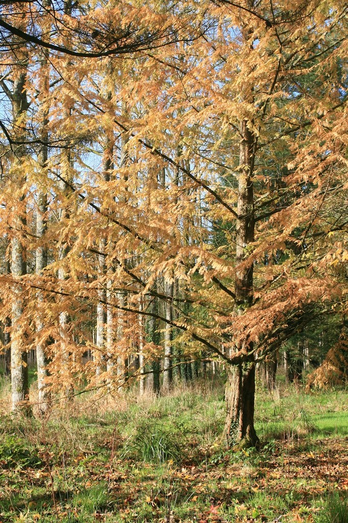 Ambiance d'automne ©moulindebeuzidou