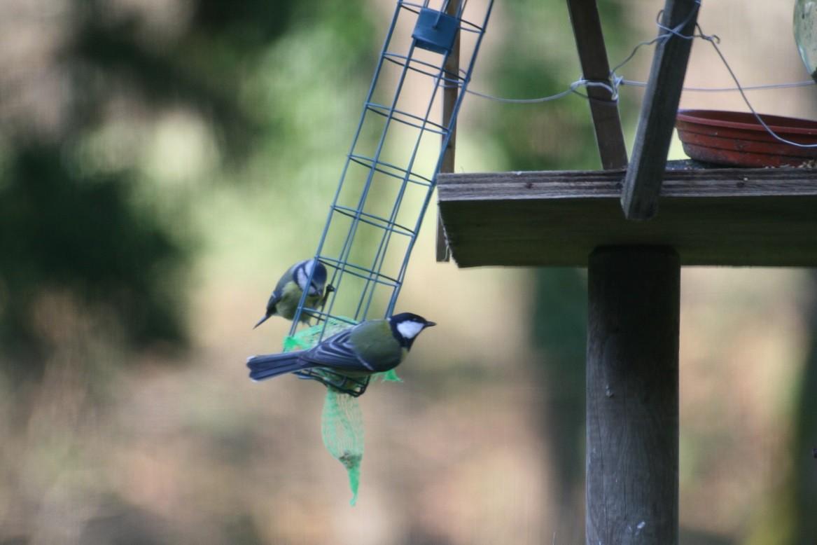 Nous sommes Refuge LPO et ici les oiseaux sont chouchoutés l'hiver ©moulindebeuzidou