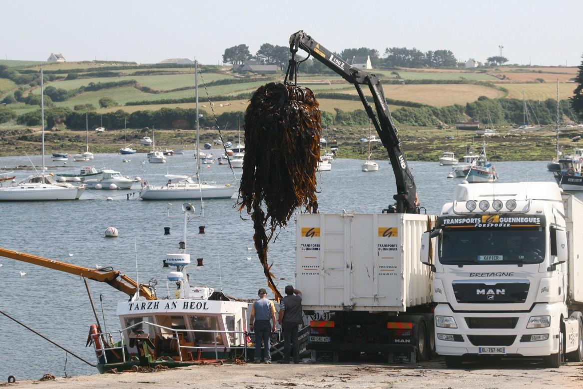 Unloading algae in Lannildut harbour ©moulindebeuzidou