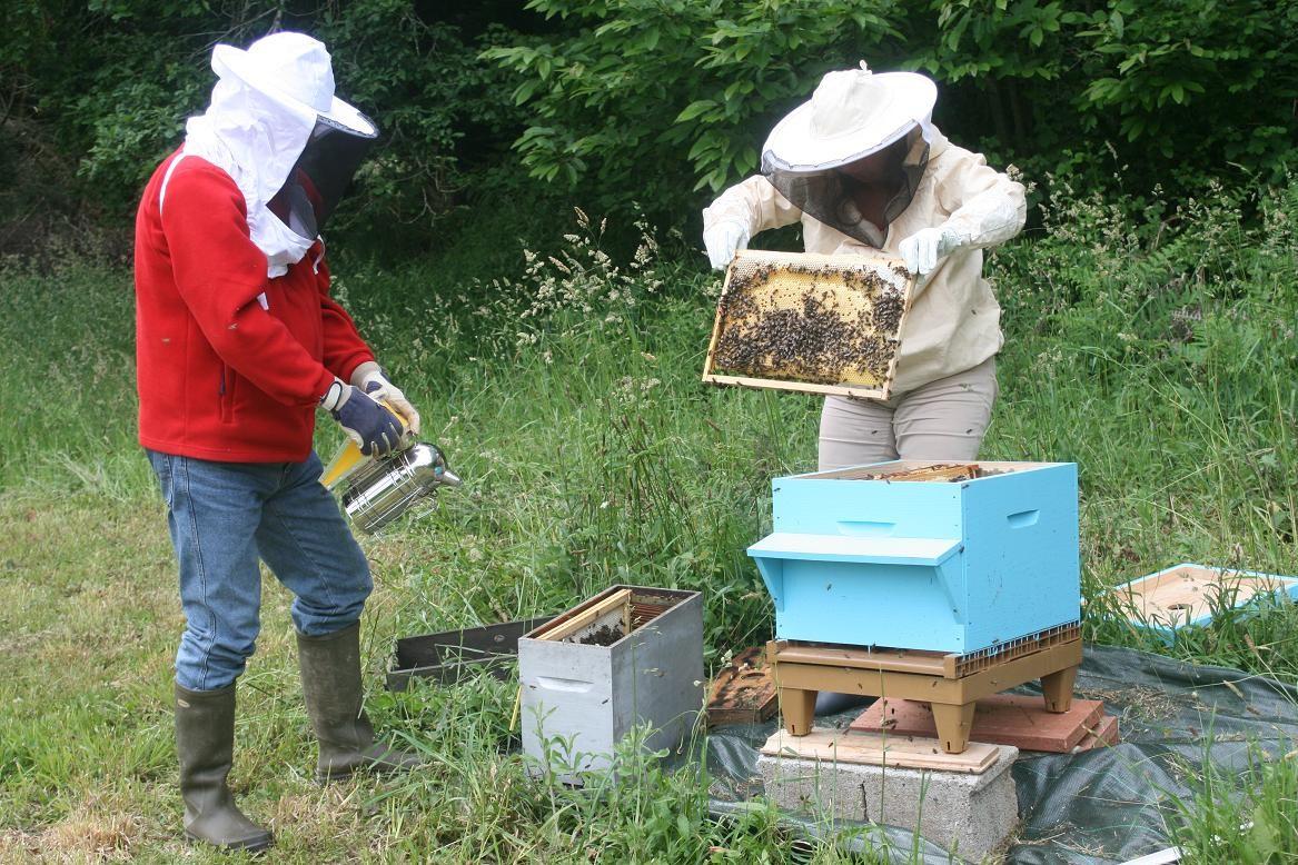 L'arrivée de nos premières abeilles ©moulindebeuzidou