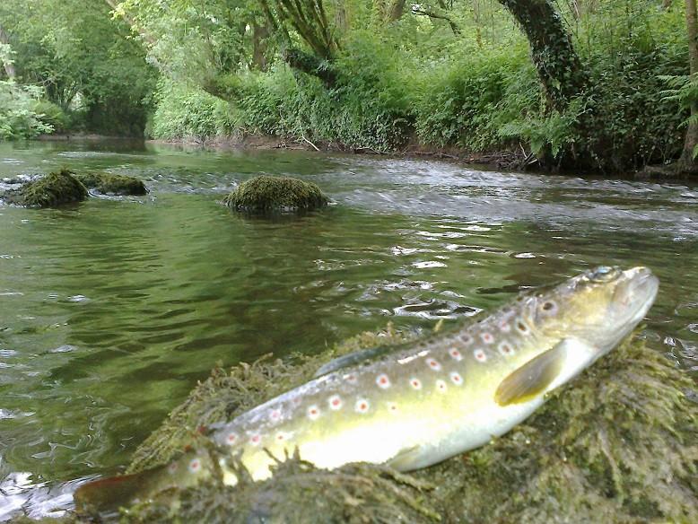La rivière qui longe la propriété est réputée pour ses truites sauvages ©moulindebeuzidou