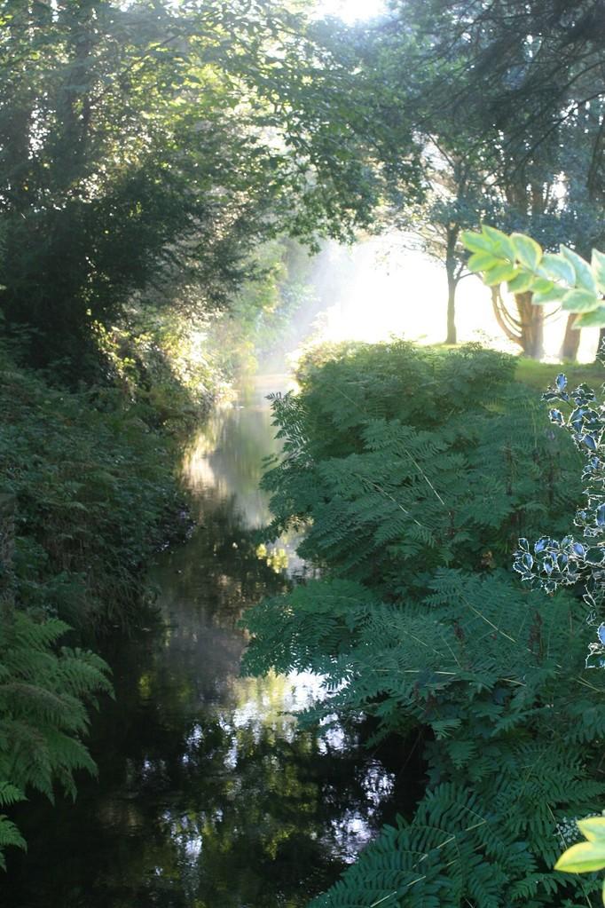 Le bief au petit matin. Au premier plan à droite des osmondes royales, une espèce protégée ©moulindebeuzidou