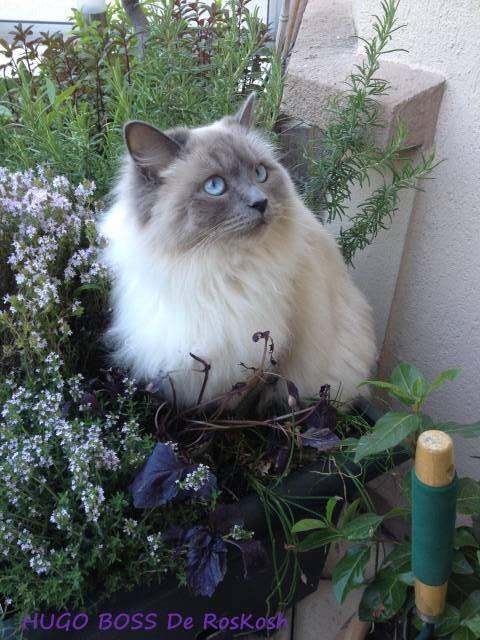 Mon bouquet garni le plus parfumé!