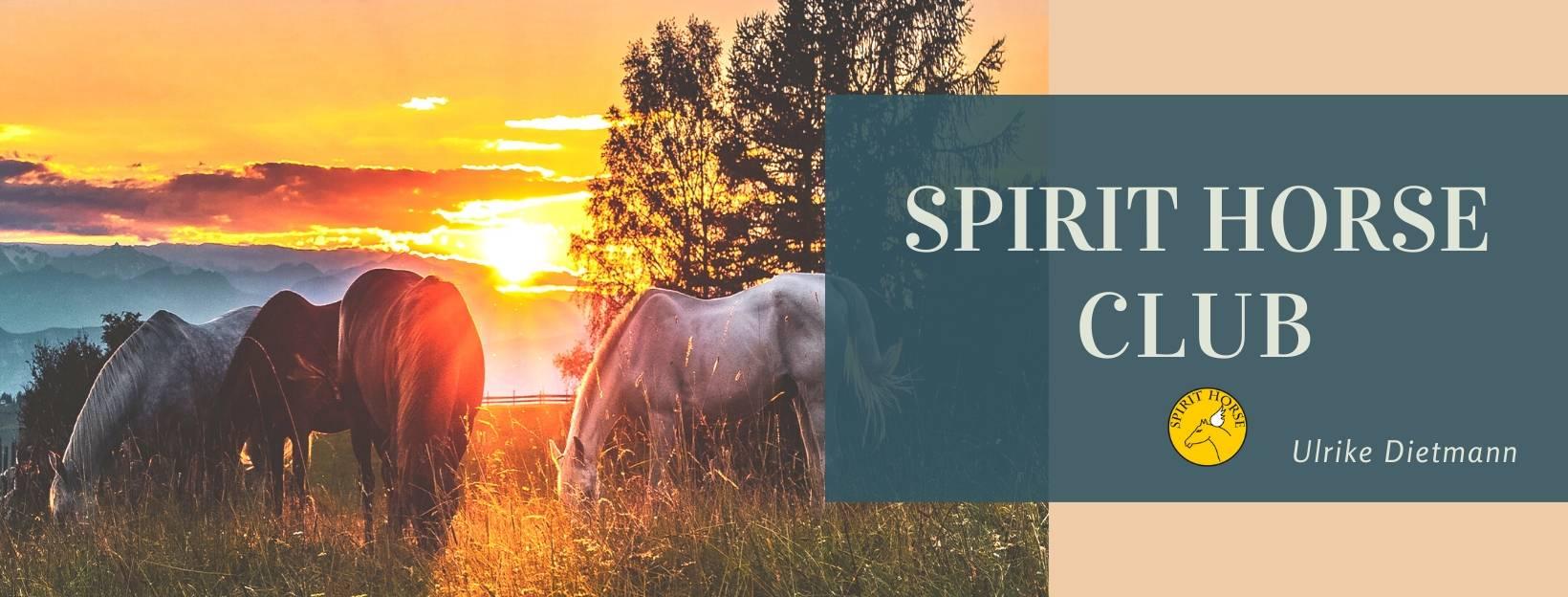 Mitgliedschaft für Pferdeliebhaber Tierkommunikation