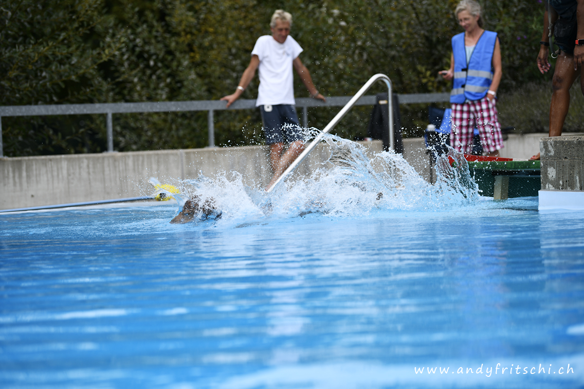 (c) www.andyfritschi.ch & HundImFreibad.ch