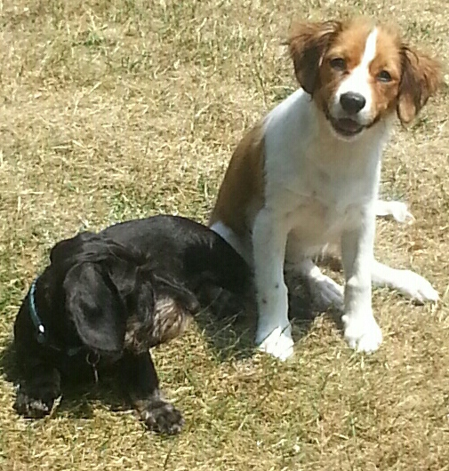 Jule und Sam(Hund von meiner Tochter)