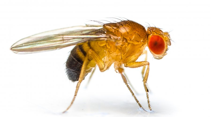 遺伝子組み換え昆虫「害虫駆除を目的に作られた人工昆虫」