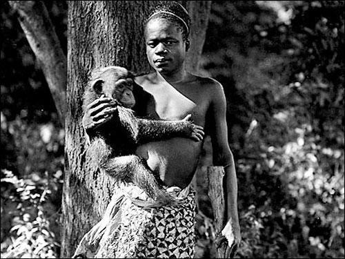 ブロンクス動物園のオタ・ベンガ(1906年)