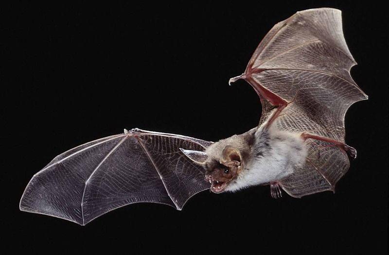 【異端科学】石正麗(石正丽)「SARSの感染源であるコウモリを発見した科学者」