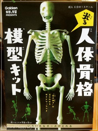 昔買ってみた人体模型キット。なんと!光るんです、そして動きが自在(笑)