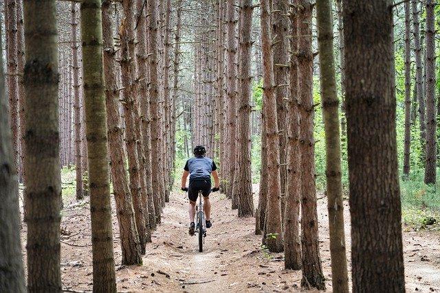 VTT occasion dans les pins