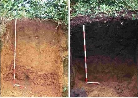 Linke Abb.: Ein nährstoffarmer  Oxisol-Boden; rechte Abb.: ein durch Terra Preta mit Organik angereichter Oxisol-Boden. Quelle: International Biochar Initiative