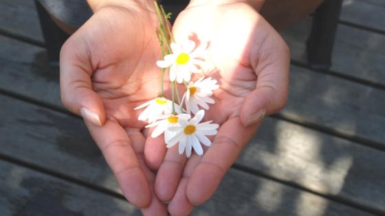 Foto von schenkenden Händen mit Blumen