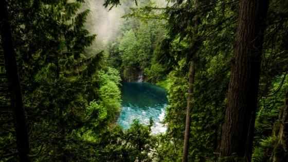 Foto Wald mit Waldsee