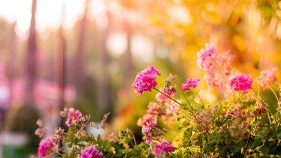 Blumen im Herbstlicht