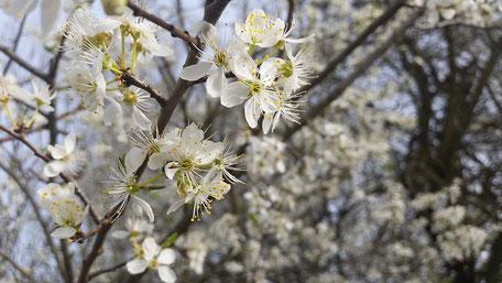 Blüten Pollen Bioland Honig