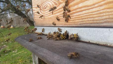 Bioland Honig-Bienen aus dem Havelland