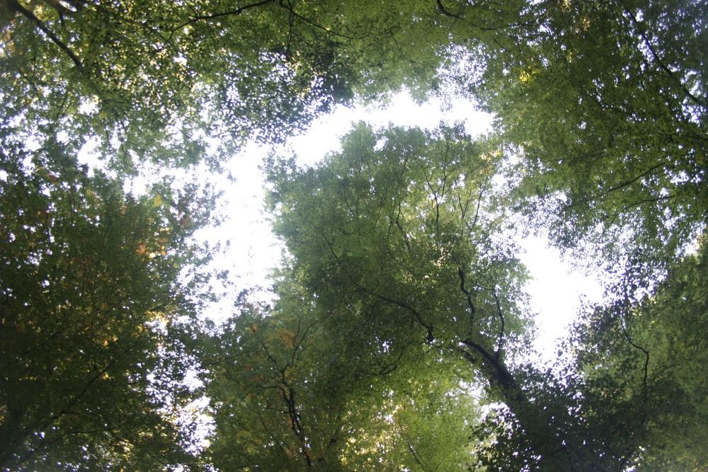 Wald ist nicht gleich Wald - erst Strukturreichtum und ungenutzte Alt- und Totholzbereiche machen ihn wertvoll für unsere biologische Vielfalt