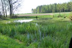 LBV-Teich bei Neustadt (c) Freimut Brückner