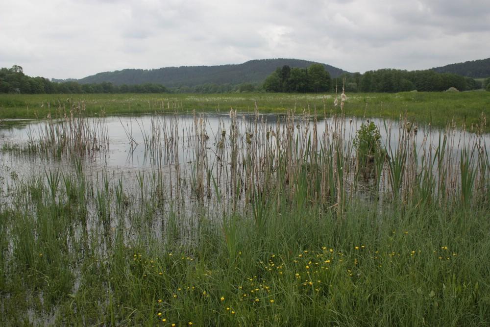 Grünland mit strukturreichen Feuchtbiotopen - unersetzlich für unsere immer bedrohteren Wiesenbrüter