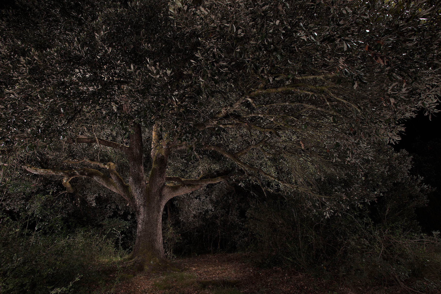 Projecte personal; Arbres il·luminats. Proyecto personal; árboles iluminados. Personal project; Trees in my own light.