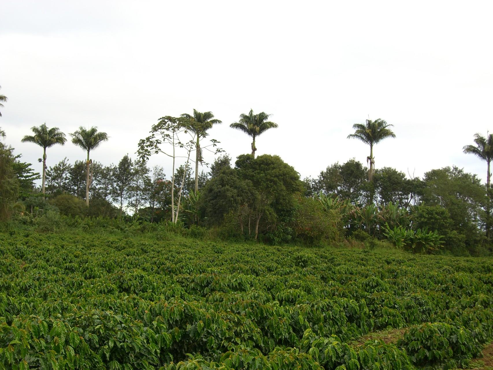 Kaffeefarm Jaguar in Encruzilhada